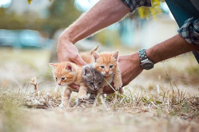 kittens-4020199_960_720_opt.jpg (22 KB)
